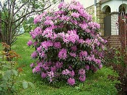 Polen bloemen Konrad