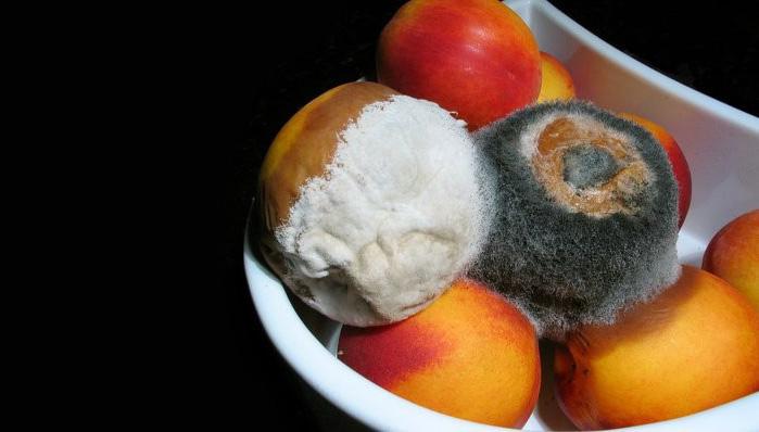 Rot-fruit